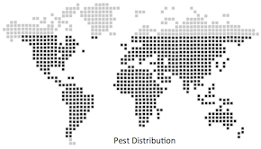 Tobacco Whitefly Distribution